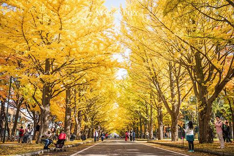 北海道大学旅游景点攻略图