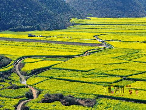 罗平旅游景点图片