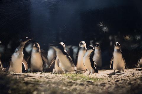 企鹅大游行旅游景点攻略图