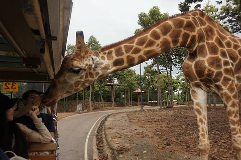 清迈夜间动物园旅游景点攻略图