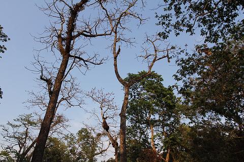 奇特旺国家森林公园旅游景点攻略图