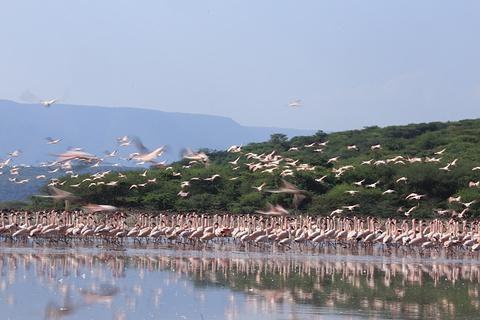 博格利亚湖