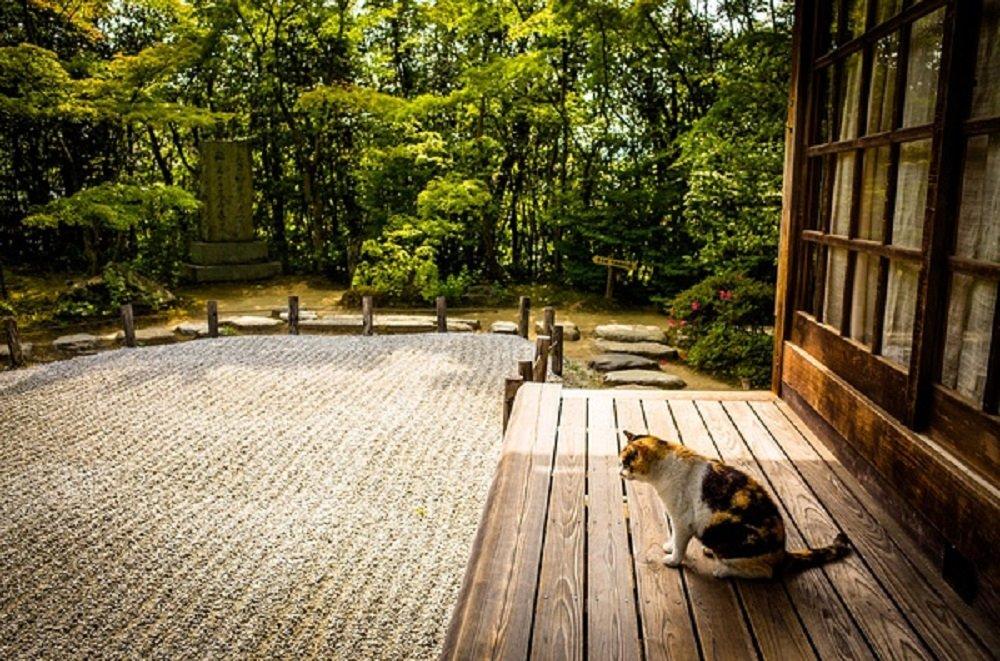 京都文化漫旅(一):最富禅意的枯山水