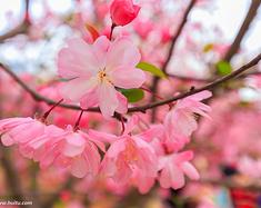 #春季赏花地图#2018上海周边赏花地大盘点,一起来观赏最美的鲜花盛宴