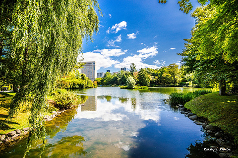 中岛公园的图片