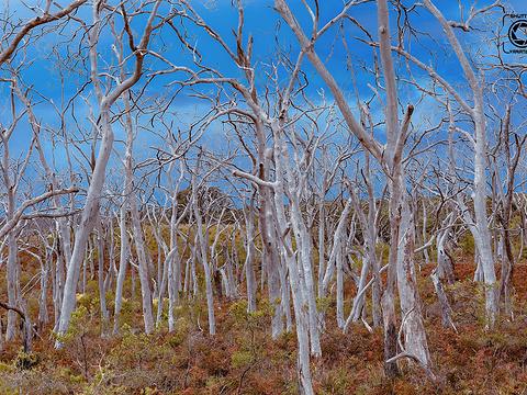 大奥特威国家公园旅游景点图片