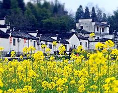 #春天去哪儿玩?#中国最美的18个自驾地推荐,超适合周末短途,一路风景美到底!