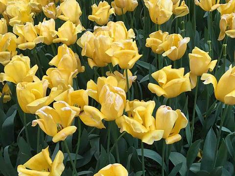 花卉园旅游景点图片