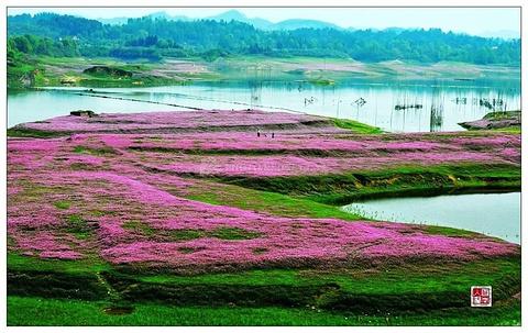 龙湾国家湿地公园旅游景点攻略图