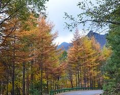 油画中的风景,黄柏塬秋日