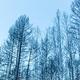 北极村圣诞滑雪场