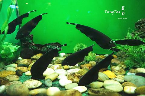 青岛海底世界水族馆