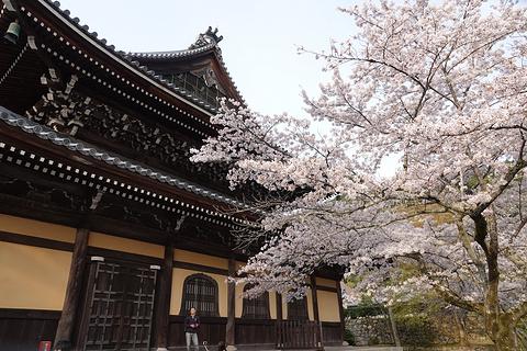 南禅寺的图片