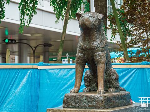忠犬八公像旅游景点图片