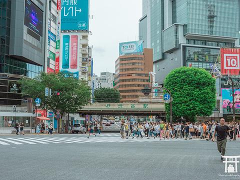 涩谷旅游景点图片