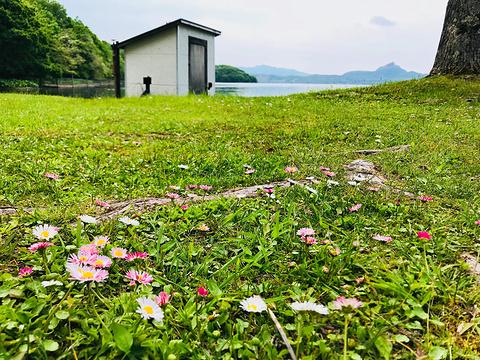 洞爷湖中岛旅游景点图片