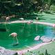 火奴鲁鲁动物园
