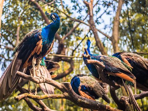 长隆野生动物世界旅游景点图片