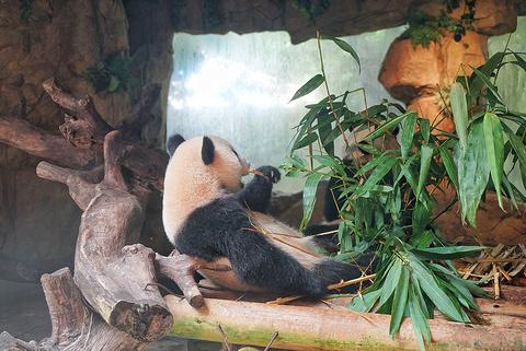 熊猫餐厅旅游景点攻略图