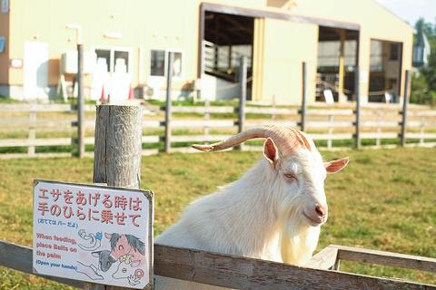 千代田牧场旅游景点攻略图