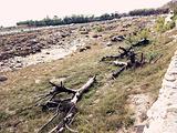 石嘴山旅游景点攻略图片