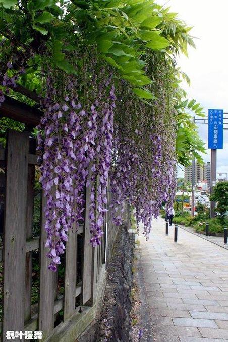 宇治街头图片