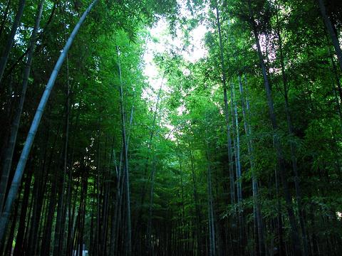 竹洞天风景区旅游景点图片