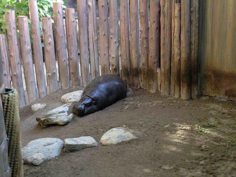 多伦多动物园旅游景点图片