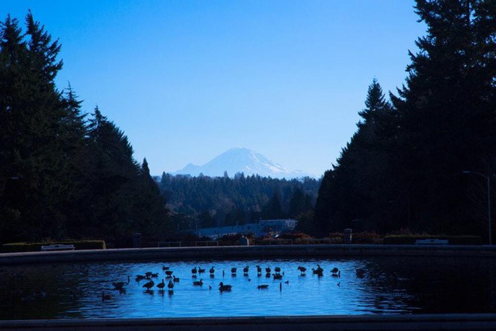 西雅图浪漫寒冬
