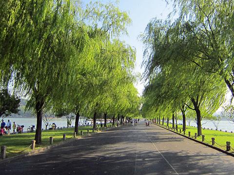 西湖旅游景点图片