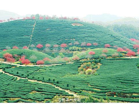 永福樱花园旅游景点图片