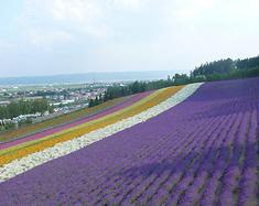 2014北海道铁路旅行
