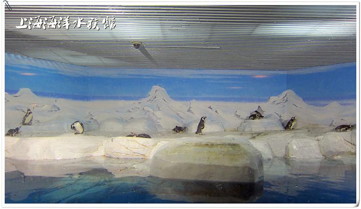 """""""建议游客趁早游玩,这样可以避开游客高峰,很安静、舒畅地感受海底世界的气息,也方便摄影,游玩时间..._上海海洋水族馆""""的评论图片"""