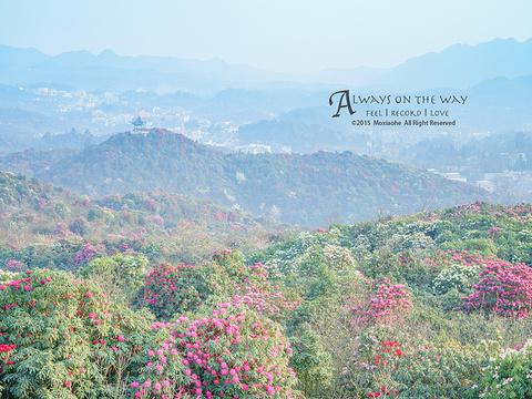 百里杜鹃风景区旅游景点图片