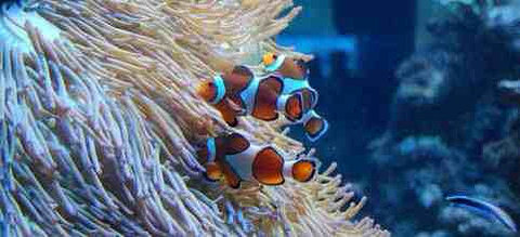 泉州石狮·海洋世界旅游景点攻略图