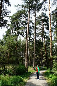美人松原始森林旅游景点攻略图