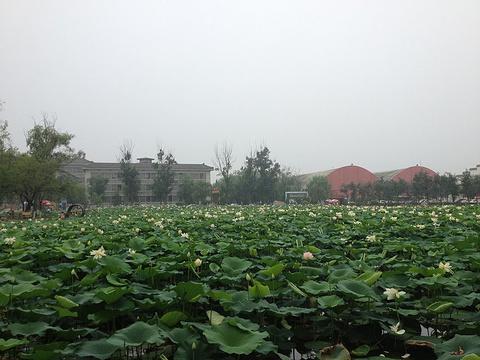 蟹岛绿色生态度假村旅游景点图片