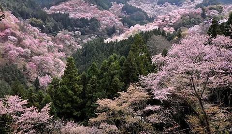 吉野山旅游景点攻略图
