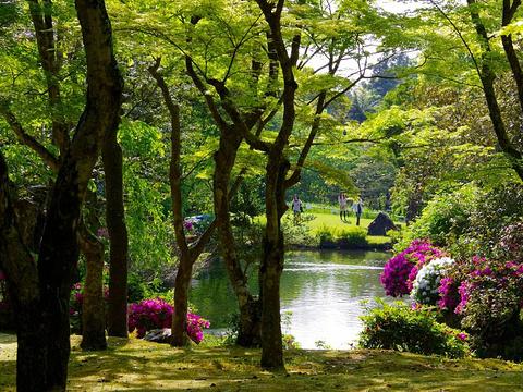 万叶植物园旅游景点图片