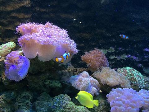长沙海底世界旅游景点攻略图
