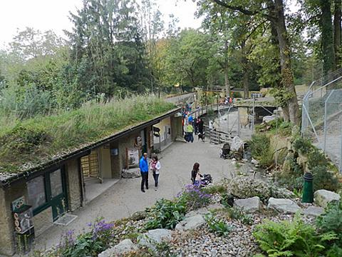 萨尔茨堡动物园旅游景点图片