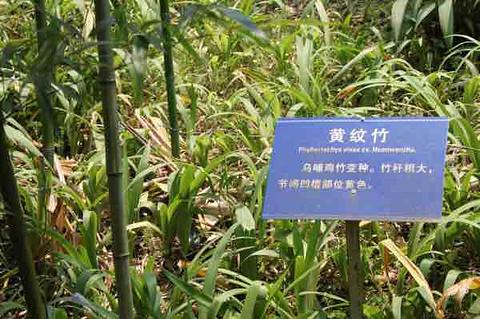 天际岭国家森林公园旅游景点攻略图
