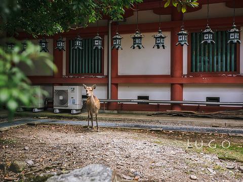 春日大社旅游景点图片