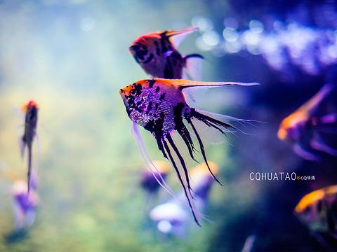 长沙海底世界旅游景点图片