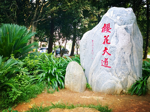 武汉大学旅游景点图片