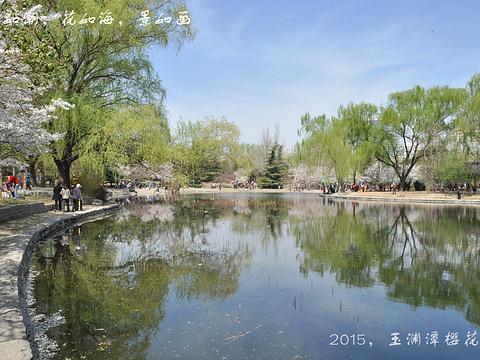 玉渊潭公园旅游景点图片