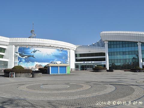 北京海洋馆旅游景点图片