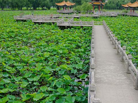 安龙招堤旅游景点图片
