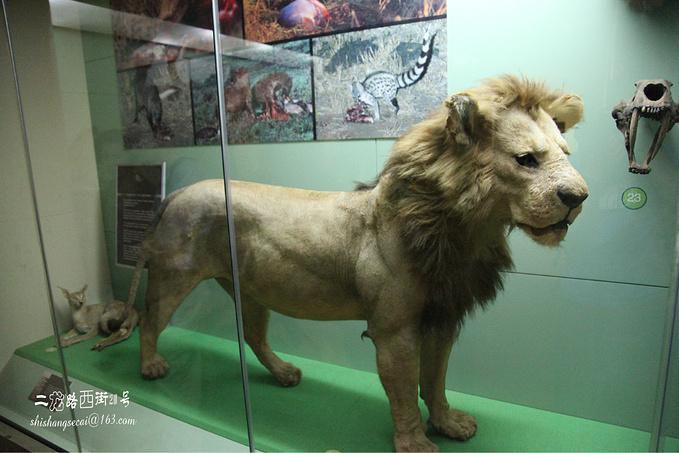 肯尼亚国家博物馆图片