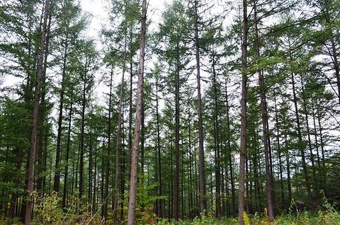 花脖山森林公园花脖山旅游景点攻略图